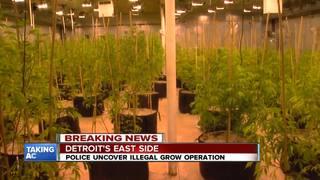Detroit police bust marijuana grow operation