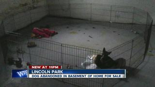 Abandoned dog found in vacant Lincoln Park home