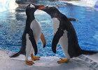 Detroit Zoo penguin center wins Exhibit Award