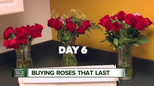 Las viejas rosas florecen en el emporio antiguo de Rose de San Antonio de <br> Primavera! HGTV