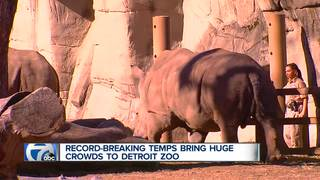 Warm weather brings huge crowds to Detroit Zoo