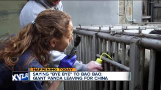 Bao Bao the Giant Panda leaving U.S. for China
