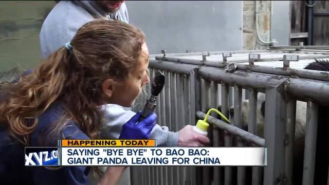 Bao Bao says bye bye to China
