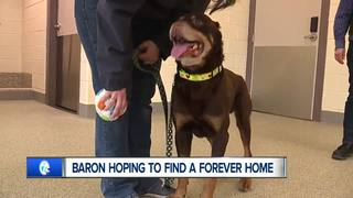 Dog who was nearly killed ready for forever home