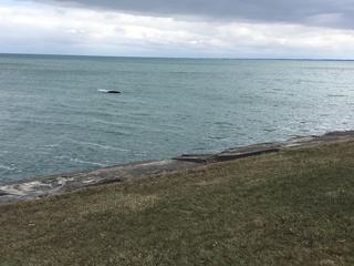 SUV accidentally drives into Lake St. Clair