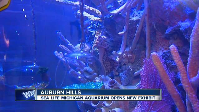 Sea Life Aquarium Jobs Michigan