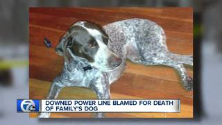 Family's beloved dog killed by downed power line