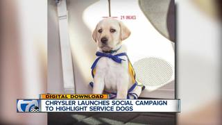Chrysler's new campaign highlights service dogs
