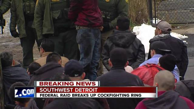 People Detained By ICE After Authorities Raid Suspected Detroit Cockfighting Ring