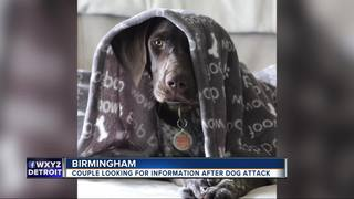 Man, dog recovering after vicious dog attack