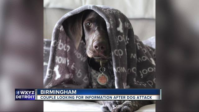 Couple looking for information after dog attack in Birmingham
