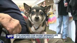 Dog honored for saving Novi woman's life