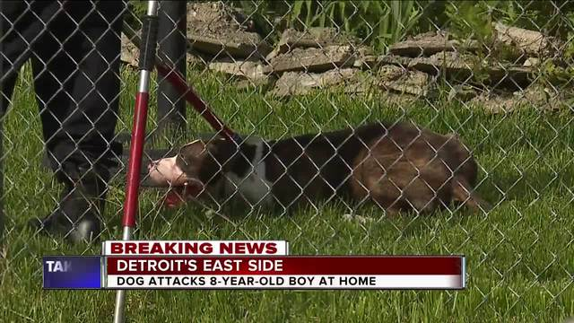 8-year-old boy injured in dog attack at Detroit home
