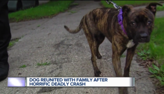 Family reunited with dog in wake of deadly crash