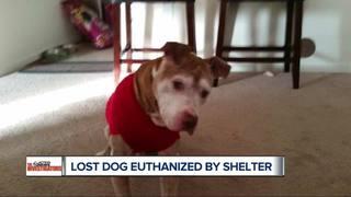 Owner devastated dog was put down after 3 hours