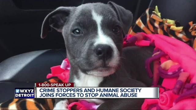 38 dogs, cats rescued from unlicensed rescue facility