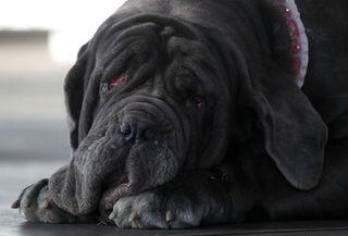 Photos: Meet Martha, the World's Ugliest Dog