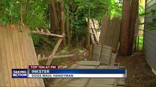 Man mauled by dogs while working on fence