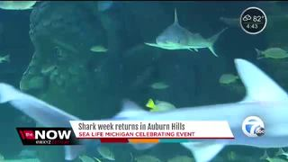 Shark Week returns to Auburn Hills