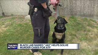 Dog helps put deadly shooter behind bars