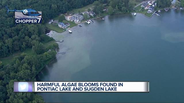 Two East Bay lakes reopen to swimmers after toxic algae clears up