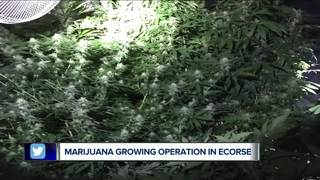 Massive marijuana grow operation found in Ecorse