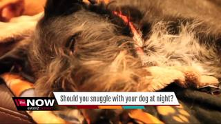 Should you snuggle with your dog at night?