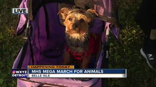 12th Annual Mega March for Animals