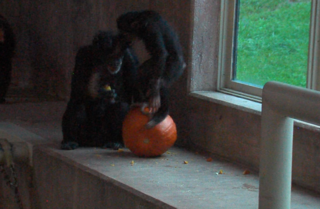 Photos: Detroit Zoo animals smash pumpkins
