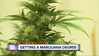 MI university could be first with pot curriculum