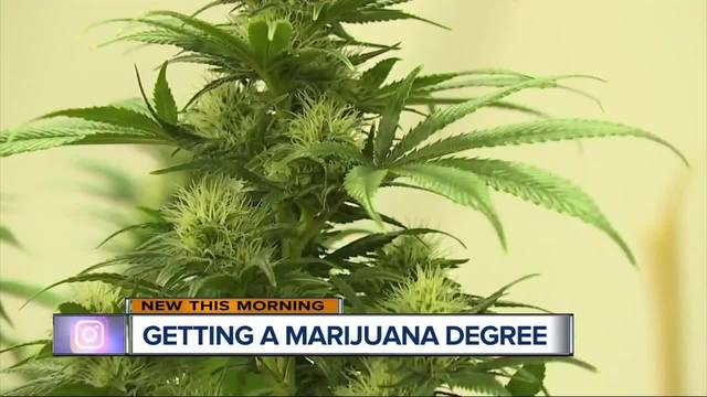 Michigan university could be first offering marijuana-based curriculum