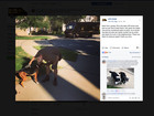 UPS drivers share pics on FB of dogs they meet