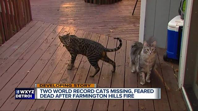 2 record-breaking cats missing following metro Detroit house fire
