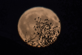 Full harvest moon tonight