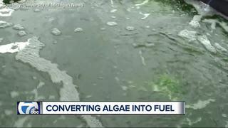 UM researchers turning algae into fuel