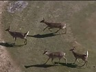 Michigan DNR warns public of deer meat concern