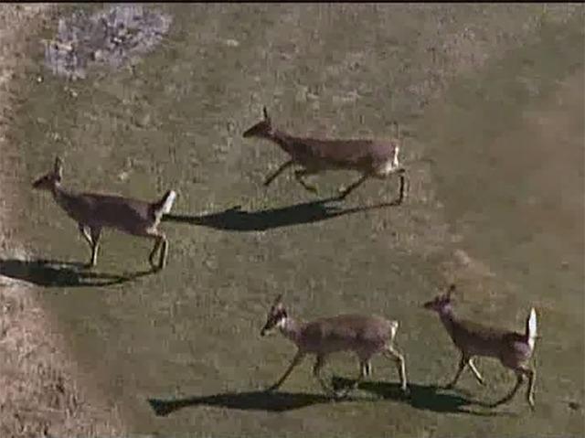 michigan dnr warns public of deer meat concern