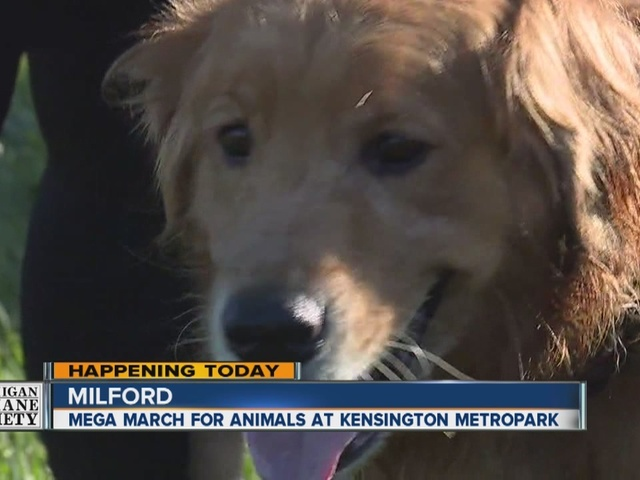Sign Up Now For Michigan Humane Society S Mega March For Animals