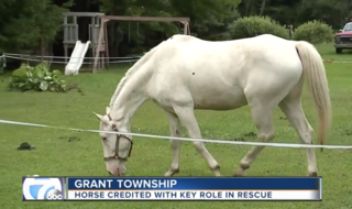 Horse credited with saving pastor's life