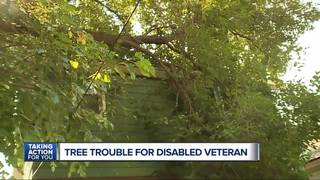 Disabled vet needs help with falling trees