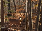 Weather likely to help deer hunters this year