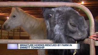Rescue needs help caring for neglected horses