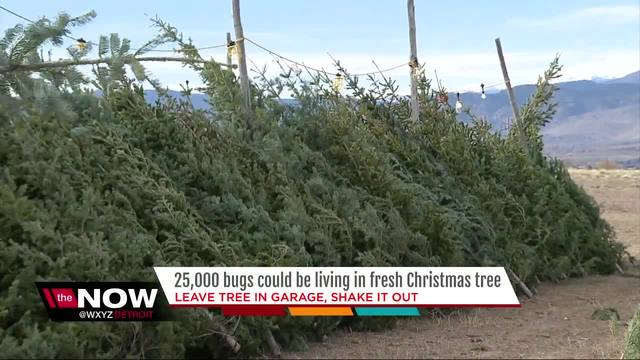 Want a real Christmas tree? You better buy now