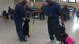 Michigan prison teams up with dog rescue group
