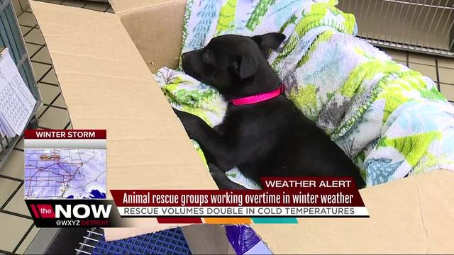 Detroit Pit Crew rescues dogs abandoned in severe weather conditions