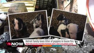 Family loses litter of puppies in house fire