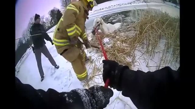 Firefighters, police rescue horse from icy pond