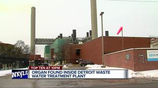 Possible human organ found at water plant