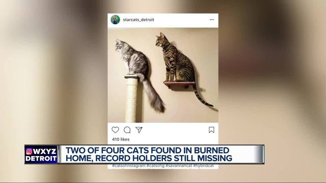 Owner says record-holding cats died in November house fire