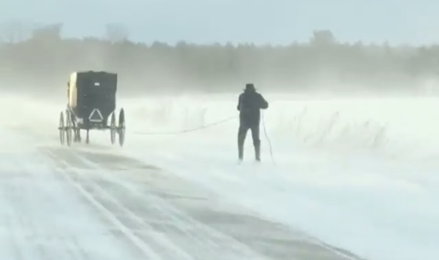 MI man skis behind Amish horse and buggy